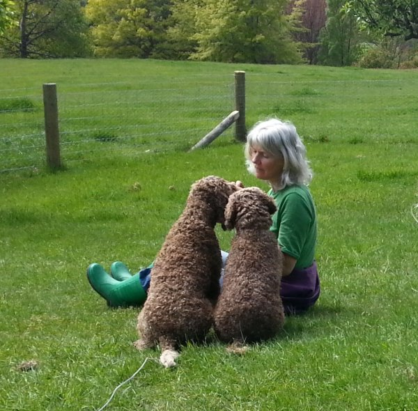 this picture shows Karen sitting in the dog run with Coco and Stella, Lagotto Romagnolos. They are all sitting and look as though they are deep in conversation