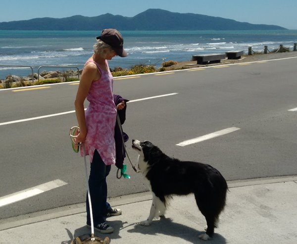 It is a hot sunny day and Kapiti Island is in the background