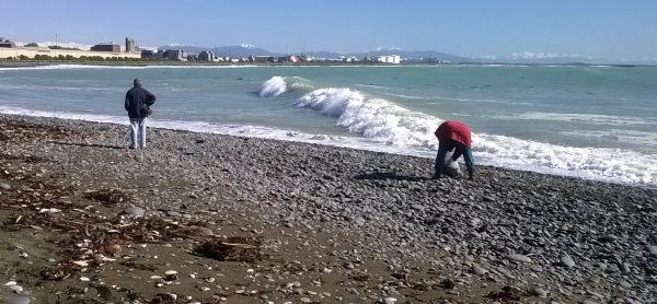 This picture shows people collecting seaweed from the Timaru coast after a wild day of weather. The waves are big and the sky is blue. Mountains in the far distance have a coating of snow
