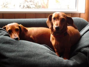 Lucy and Rosie