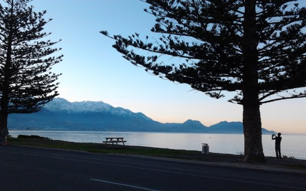 this picture looks across the bay towards the Kaikoura mountains at dusk. Two large trees are silhouetted in the picture with a small person (Chris) taking a photo of the Kaikouras