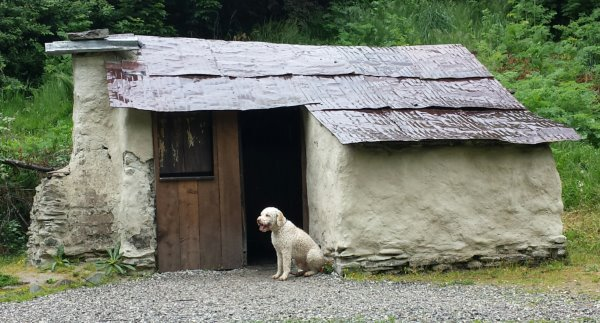 this picture shows Joey (an off white dog) sitting outside a chinese miners cottage, in Arrowtown, which also has off white walls
