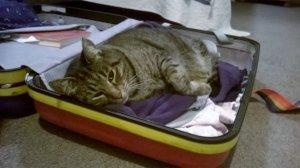 Tiger, the tabby cat, enjoys sleeping in 'things'