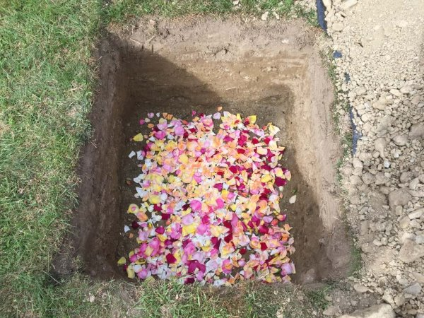this picture shows Stella's grave, a dug hole in ground with a carpet of rose petals