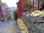 Autumn leaves from the few trees up the stairway