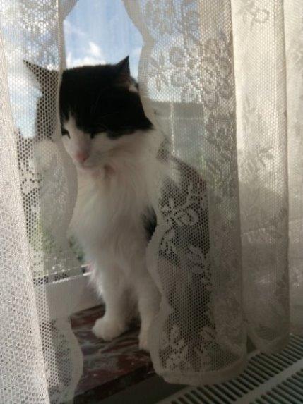 Bizzet, another kitchen cat.