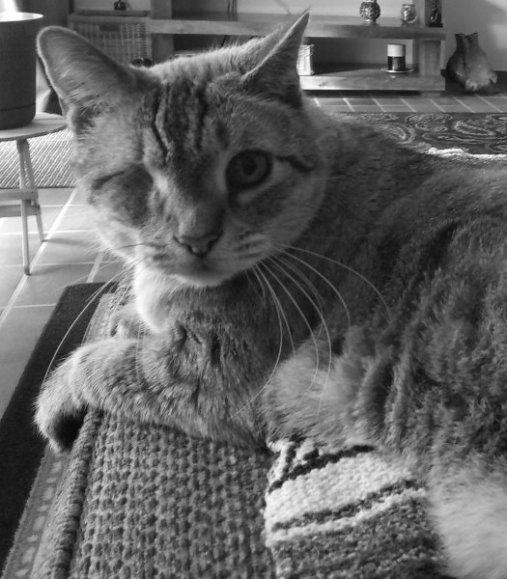 Jake, the sofa, lap cat,