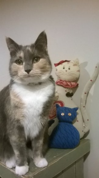 Mačka, the queen of play